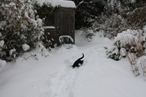 guinness in snow
