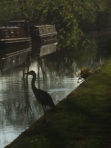 grand union canal and heron MK